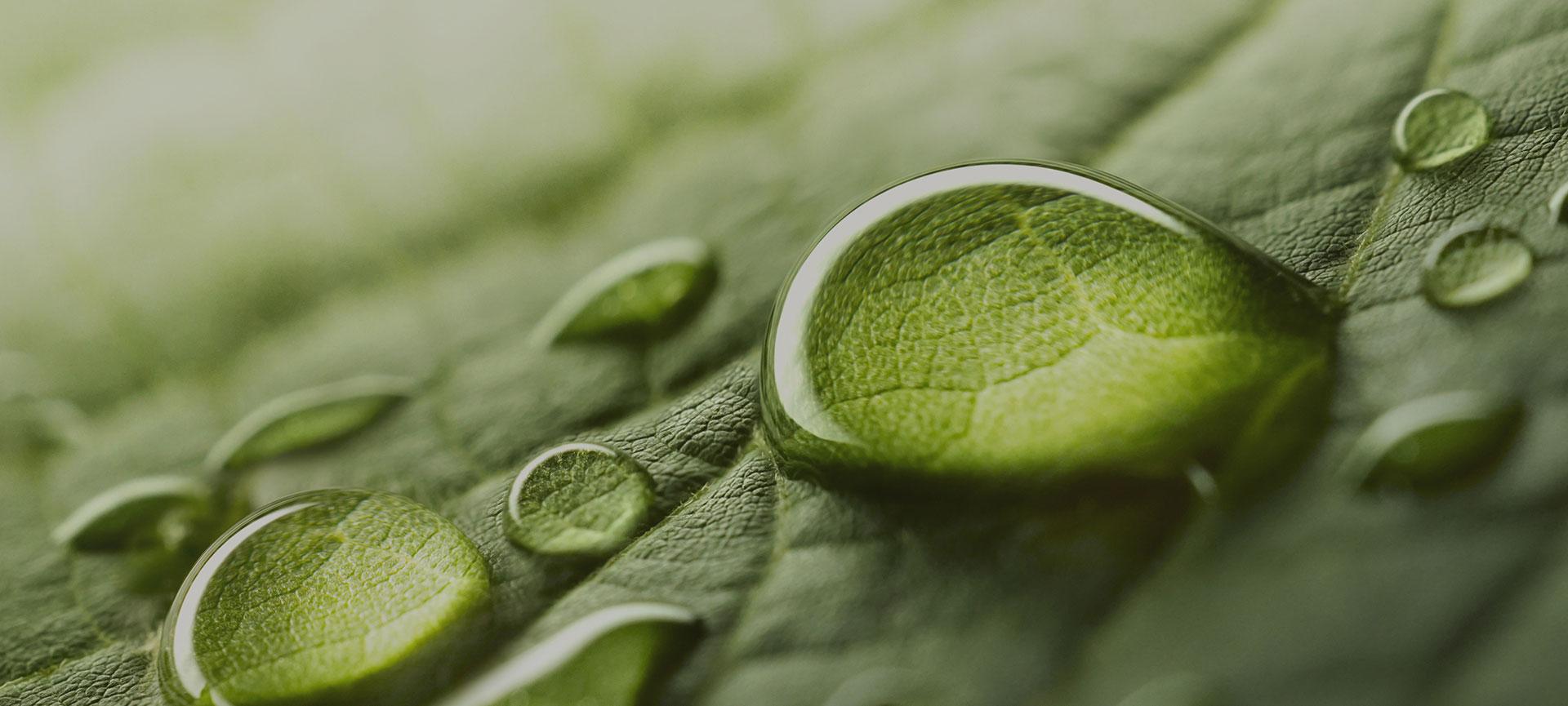 gotas sobre hojas