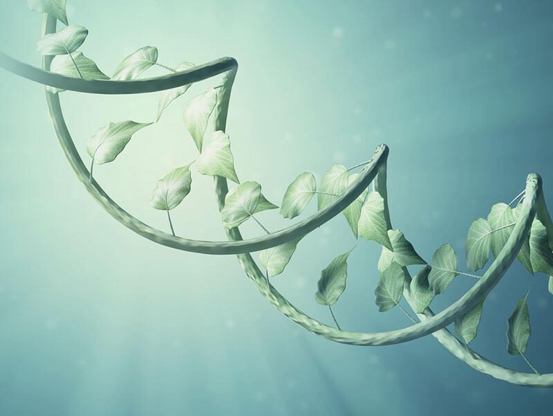 cadena de adn y hojas